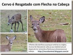 cervo-flecha