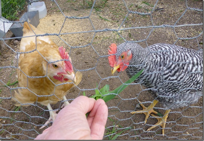more chicks 048