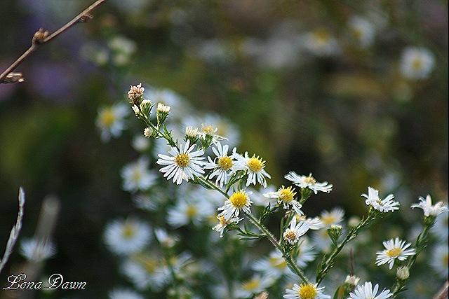 [CC_Flowers%255B10%255D.jpg]