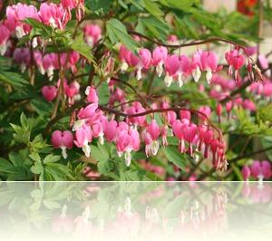 bloemen in de tuin 003