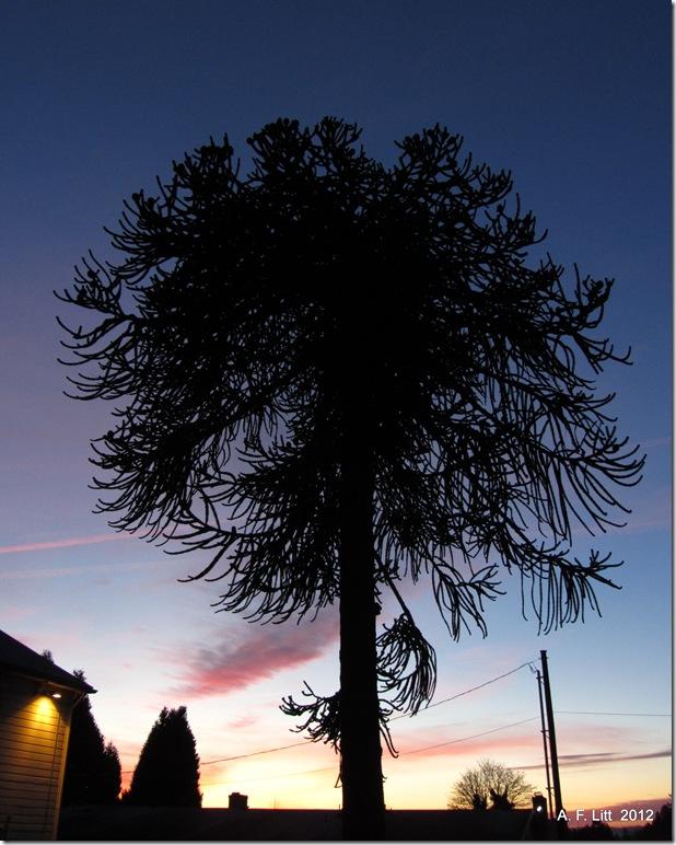 Sunset on Powell.  Photo of the Day, January 27, 2012.  Gresham, Oregon.  January 12, 2012.
