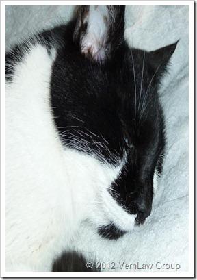 Cat_BossP1040040