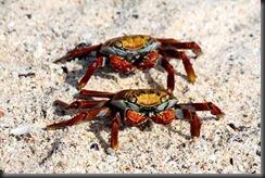 Sally proudfoot crabs tony