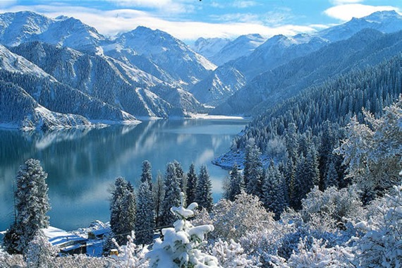 Tianshan Mountain Xueling Spruce Forest