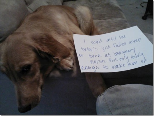 dog-shaming-bad-5