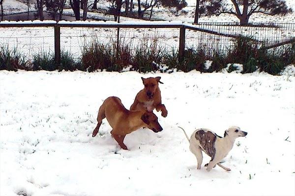 Bungendore dogs.jpg
