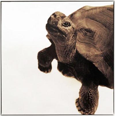 tortoise_D