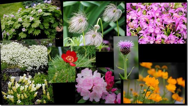 2011-05-29 Botanisk have 20112