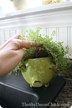 Piggy planter