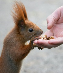 building trust with a squirrel