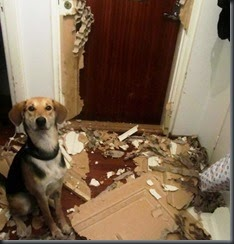 dogs_assholes_13