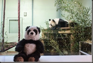 16_12_2014-10_22_14-6081Edinburgh Zoo