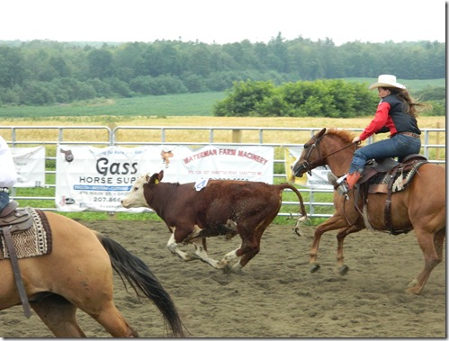 Team Penning 2011 123