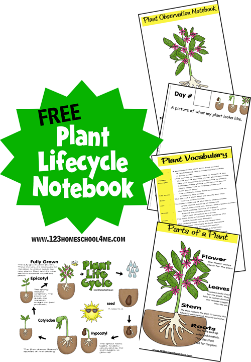 FREE Printable Lifecycle Notebook for Homeschooler #science #homeschooling #preschool