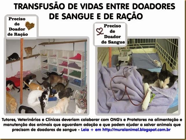 transfusao_vidas-gatos