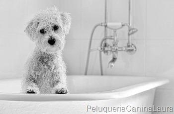 baño maltes