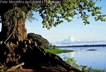Amazônia. Biodiversidade brasileira. Imagem cedida pelo Ministério da Ciência e Tecnologia (MCT).