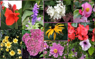 NOTL flowers