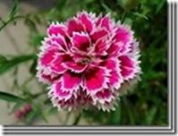 clip_image03362