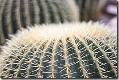 nybg-new-york-botanic-gardens-bronx-019