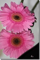 blommor 019_1 kopiera