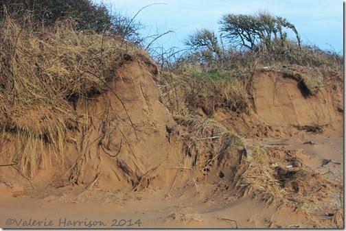 90-damaged-dunes