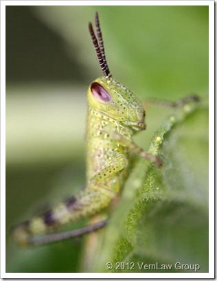 GrasshopperIMG0012