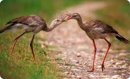 parque nacional el rey aves