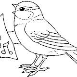 Singvogel.jpg