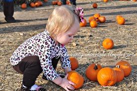 10-29-12_Pumpkin-Patch7