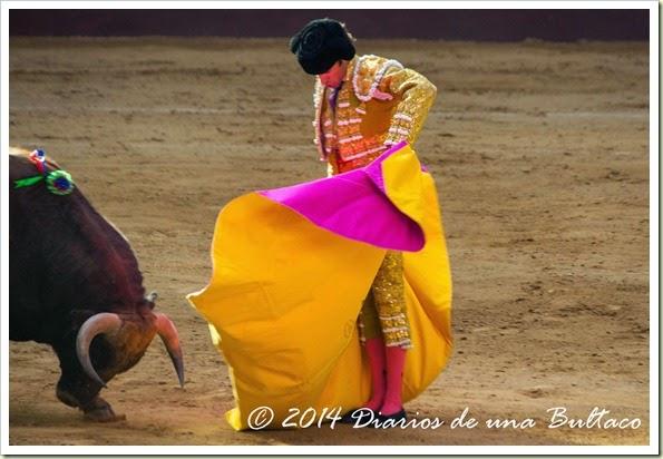 Toros 2014 (2)-25