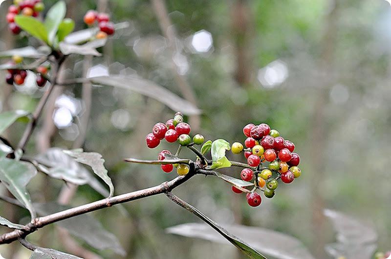 Wild-berries1