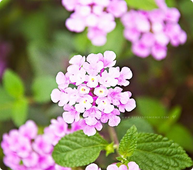 Flowers-(1)
