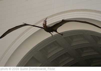 'Pterodactyl' photo (c) 2008, Quinn Dombrowski - license: http://creativecommons.org/licenses/by-sa/2.0/
