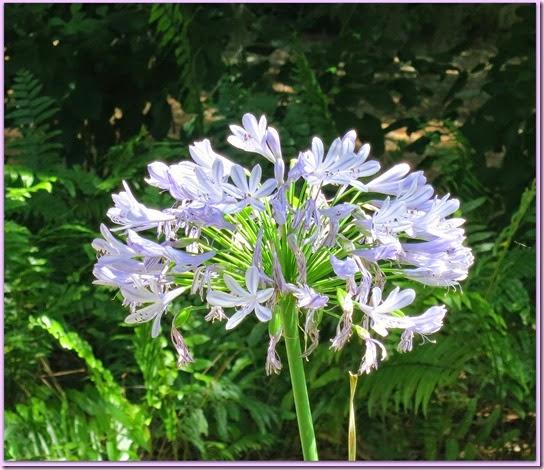 flowerIMG_5533