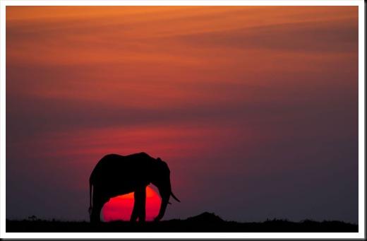 goldstein-elephant_2335789k