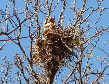 Hawks Nest at Derge