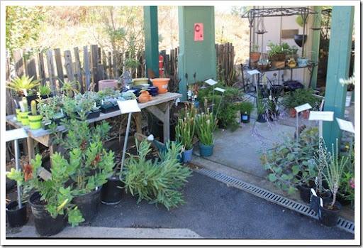 Succulents and More: UC Santa Cruz Arboretum fall 2012: Australia
