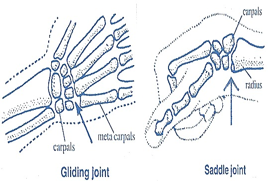 gliding-joint-saddle