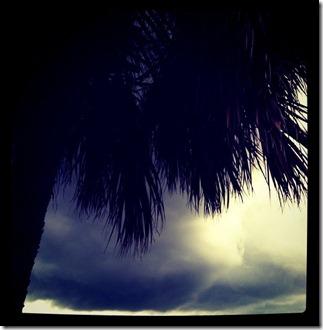 treestorm2