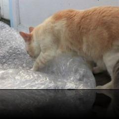 cat2-300x225