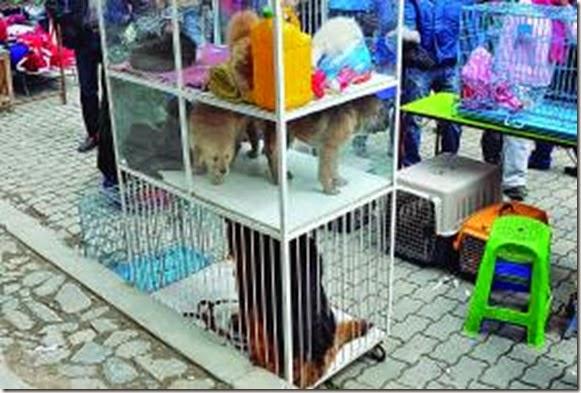 Mascotas en El Alto