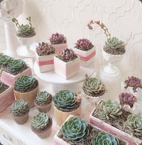 succulents 1010391_10152181320709144_302586119_n tulip
