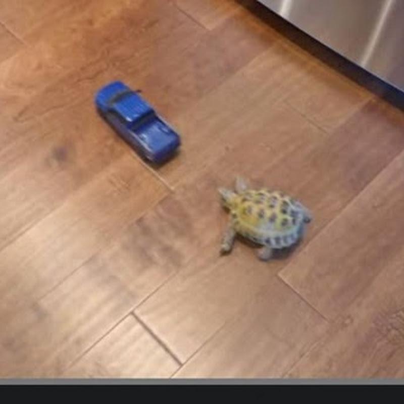 Η χελωνιτσα και το φορτηγακι