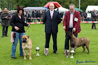 20100513-Bullmastiff-Clubmatch_31150.jpg