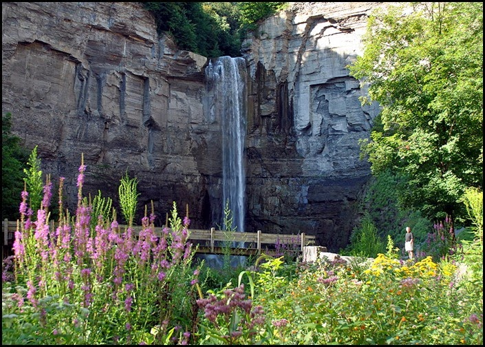 01e - Gorge Trail - Taughannock Falls and wildflowers