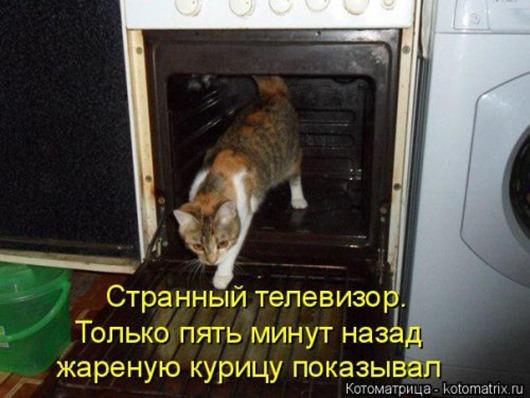 1410530213_kotomatricy-35