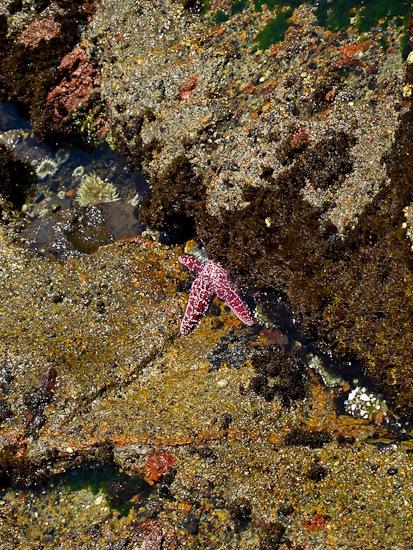 Channel Island NP Santa Cruz Island Pelican Bay Hike (6)