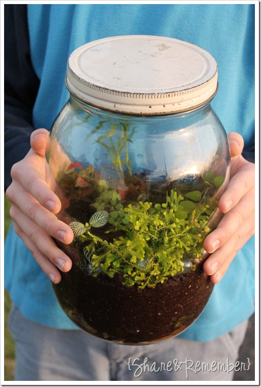 Making Terrariums in a jar