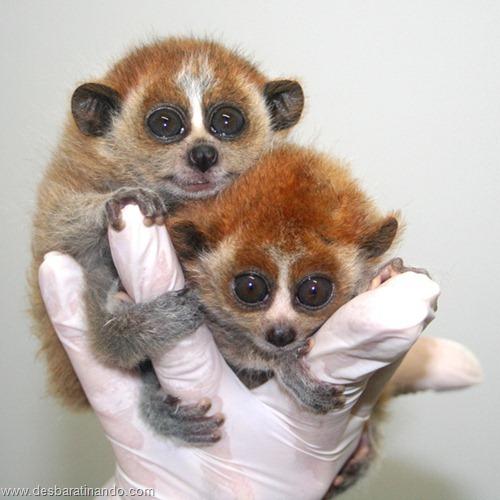 filhotes recem nascidos zoo zoologico desbaratinando animais lindos fofos  (42)